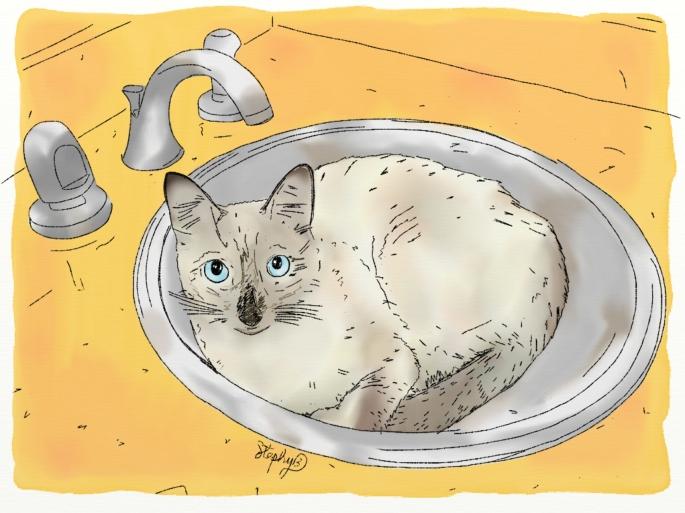 Andy el gato de CatalinaTobón.